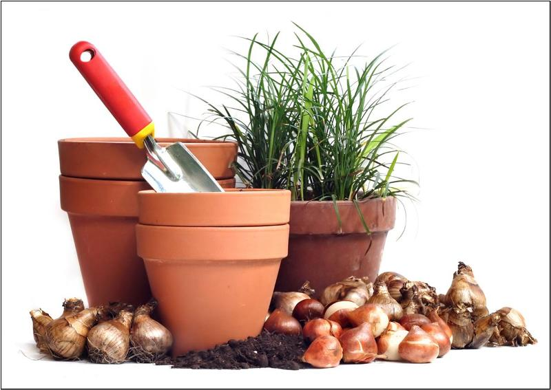 superb planting bulbs Part - 4: superb planting bulbs good ideas