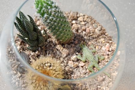 Desert Biome Picture