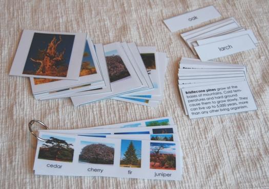 tree_cards1