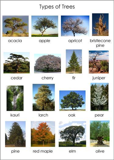 tree_chart1